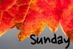 Sunday fall