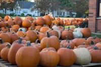 pumpkins 2016